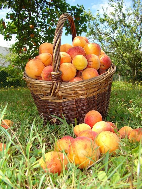 Apricots © Photographdreamer - Licencia CC BY-NC-SA 2.0
